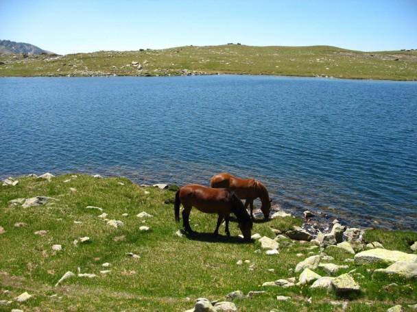 sea view horses