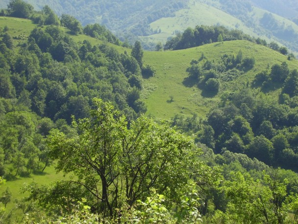 bulgarian nature - forest and hills view