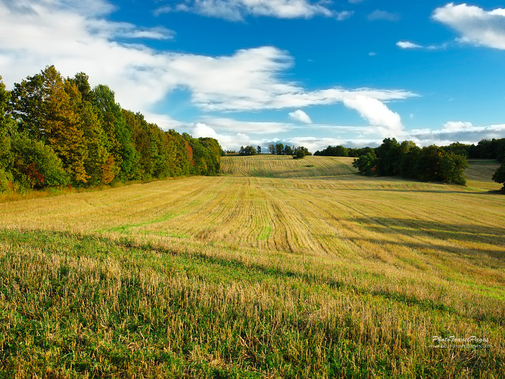 how to add a property to a field himl