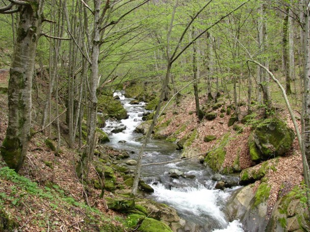 mountain river bulgaria