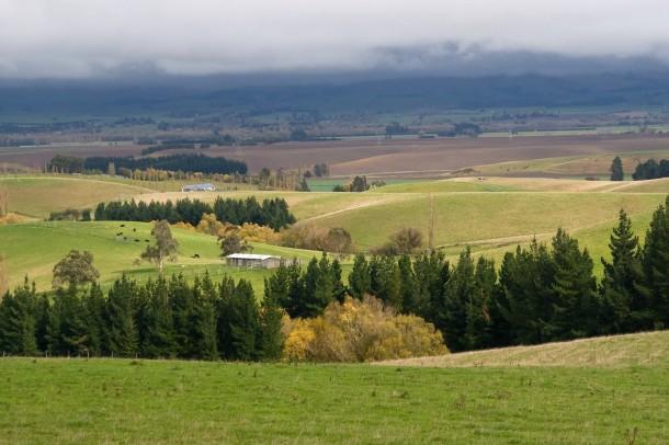 green fields in Bulgaria